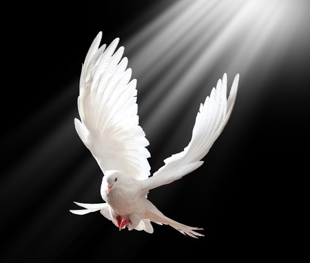 dove with light above it