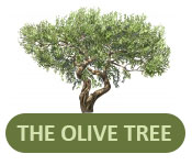 olive tree news letter logo