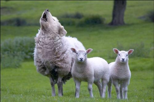 False Shepherds and Fake Sheep